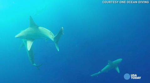 Are you brave enough to swim with these sharks?