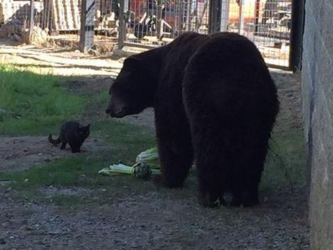 Cat wanders into zoo's bear exhibit and this happened