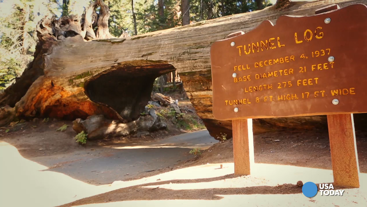 You could strain your neck trying to see the top of General Sherman, the world's largest living single stem tree, at Sequoia National Park, but don't miss all the wonders down below. Video shot by Marilyn Chung, The Desert Sun.
