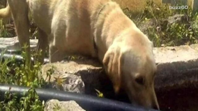 Dog Stays with Boy Stuck on Mountain