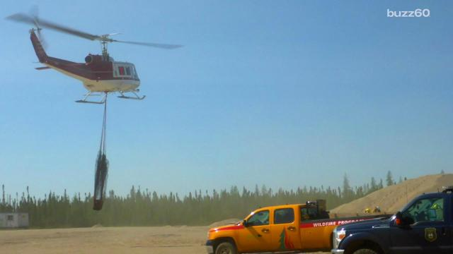 A stubborn bear was spending too much time hanging out at a construction site and eventually had to be airlifted back home.