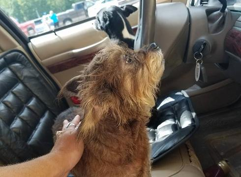 Grand Theft Fido Dogs Steal Owners Car Drive It Into A Walmart
