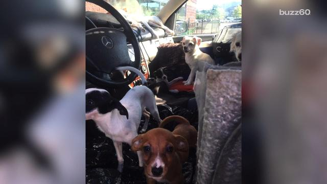 Police find 22 dogs living in filthy car in the middle of summer