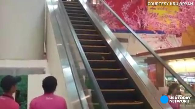 Mall rat refuses to be caught, runs up down escalator