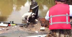 Heroes come to the rescue of stranded pit bulls