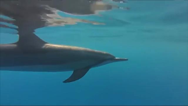 Hawaii may ban some swimming with dolphins