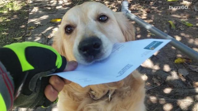 An Australian mail worker was able to prove dogs and mailmen really can get along! Nathan Rousseau Smith (@fantasticmrnate) shows us.