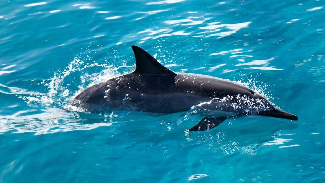 Swimming with dolphins in the wild could soon be banned in Hawaii