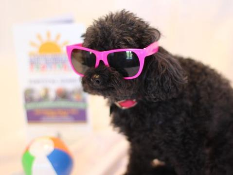 Tiny poodle has free reign at nursing home