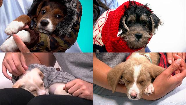 Puppies in adorable outfits