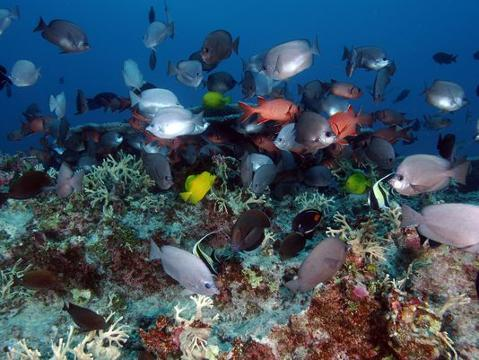 Obama creates world's largest marine reserve