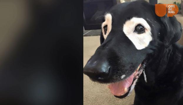 Dog with skin condition is teaching kids about self esteem