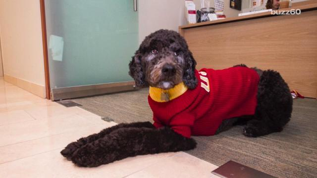 USC hires its first dog professor