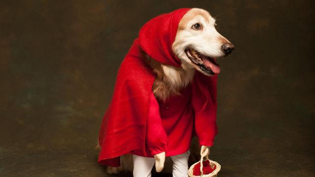 Red vs blue dress up your pet