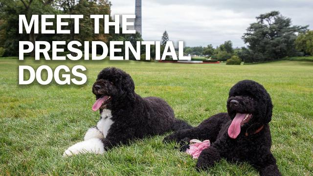 Meet the Presidential dogs for National Dogs of Politics Day