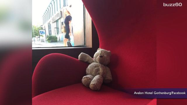 Hotel turns a lost teddy bear into a viral sensation