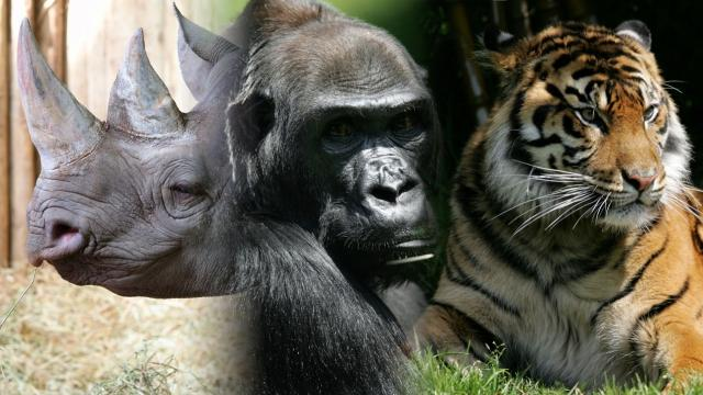 Animal species are disappearing at an alarming rate. Some are calling the current trend Earth's sixth mass extinction. Video provided by Newsy