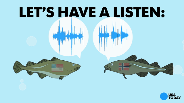 Do fish have regional accents? Take a listen
