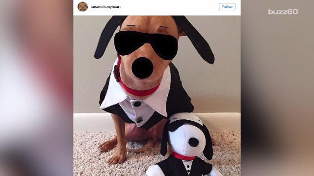 Most popular Halloween pet costumes for 2016