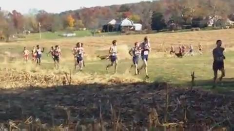 Deer tackles runner during cross-country race