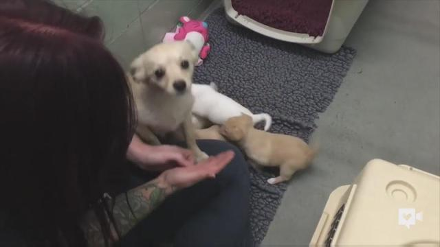 Dog no longer sad after reuniting with her puppies
