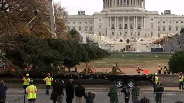 Idaho Christmas Tree arrives on Capitol Hill