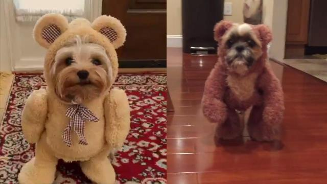 Dogs Dressed In Teddy Bear Costumes Need We Say More