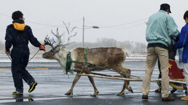 Turns out, only Santa has the ability to control the antlered animals.
