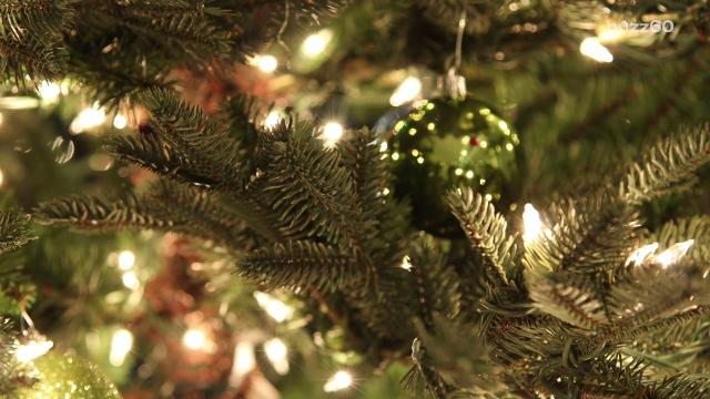 Christmas Trees Where To Cut Your Own Christmas Tree In New Jersey