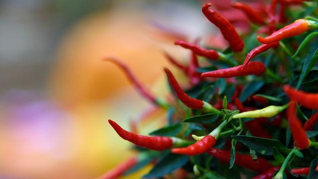 Are peppers really the secret to longer life?