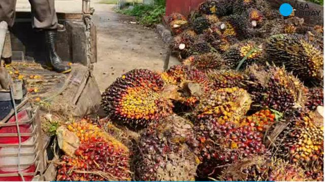 The European Food Safety Authority has said the contaminants of palm oil raise many health concerns, including the risk of cancer.