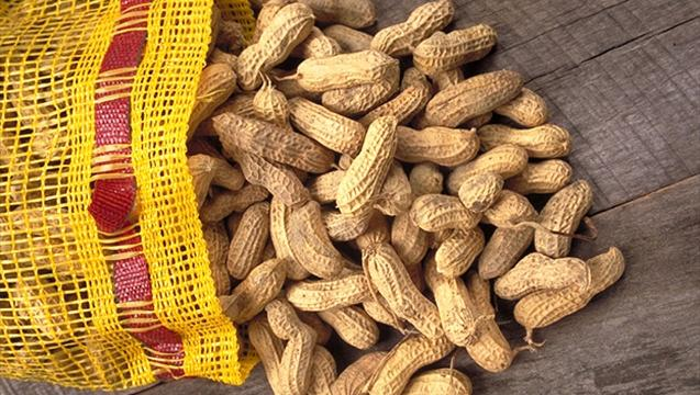New Guidelines: Babies Should Eat Peanuts Sooner