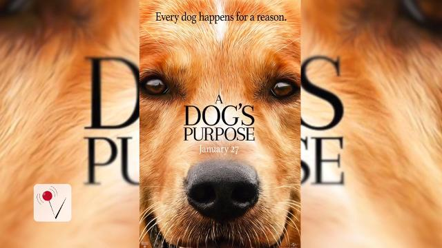 "The upcoming film ""A Dog's Purpose"" looks like the perfect family film animal lovers would enjoy but PETA is calling for a boycott of the film after a disturbing video surfaces. Susana Victoria Perez (@susana_vp) has more."