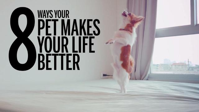 8 ways your pet makes your life better