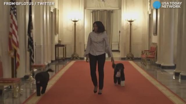 First lady Michelle Obama brought her dogs Sunny and Bo with her for a final stroll around the White House.