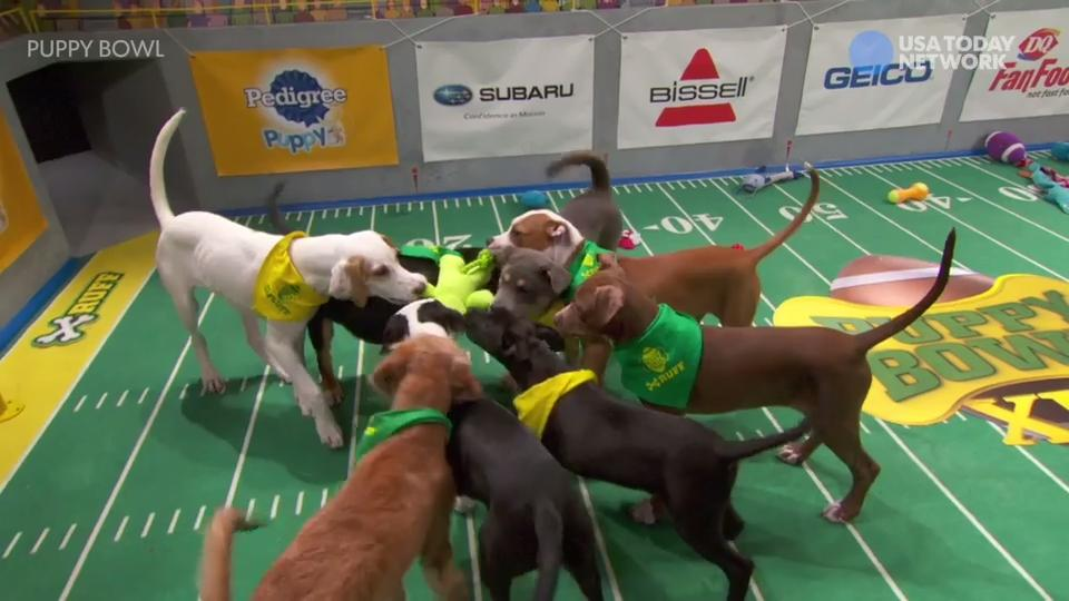 "Animal Planet's annual football ""game"" has a winning team with special-needs pooches Winston, Lucky and Doobert."