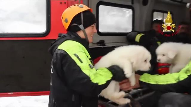 Emergency crews digging into an avalanche-slammed hotel were cheered Monday by the discovery of three puppies who had survived for days under tons of snow - giving them new hope for the 23 people still missing in the disaster. (Jan. 23)