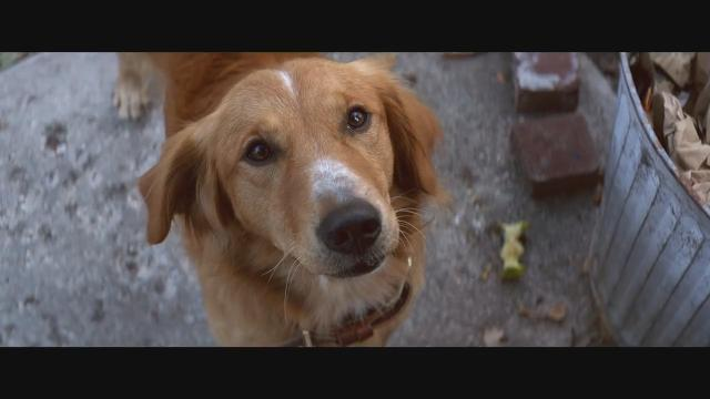 Should dog lovers see 'A Dog's Purpose'?
