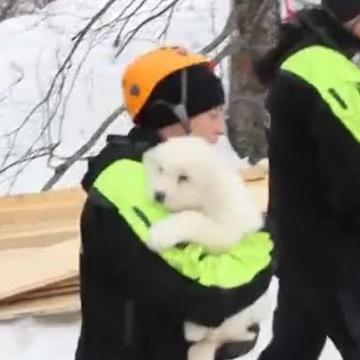 Rescuers digging out an Italian hotel buried by an avalanche on Monday discovered three puppies that survived five days in the snow.