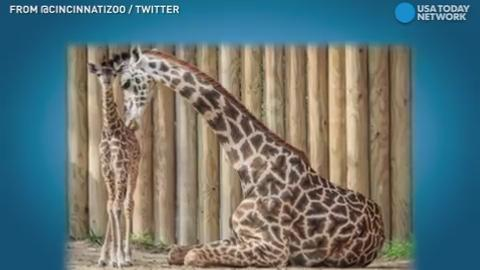 Zoos are facing off by tweeting adorable photos of their animals with the hashtag #CuteAnimalTweetOff. But let's be real, the whole internet wins in this tweet-off!