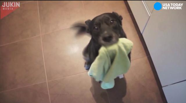 Most of us don't like to do household chores, but this dog loves them!