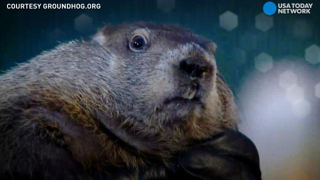 groundhog day 2018 forecast will punxsutawney phil see his shadow