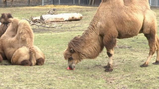 detroit zoo animals celebrate valentines day - Valentines Animals