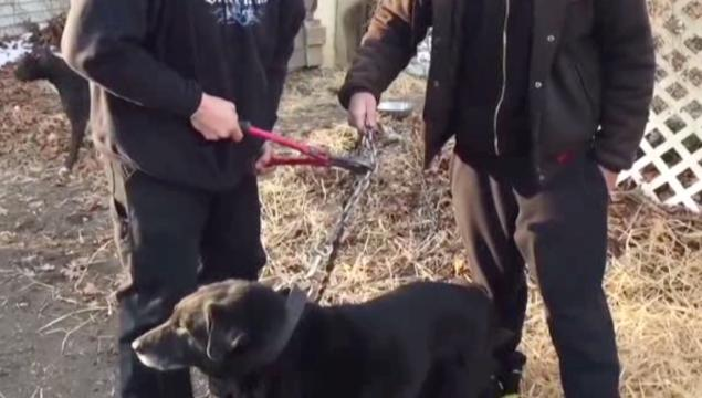 Dog Chained Outside For  Years Gets New Life