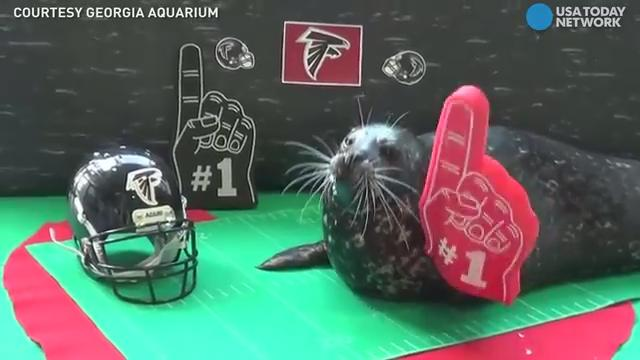 The Georgia Aquarium and its animals showed their love for the Atlanta Falcons in the cutest way possible!