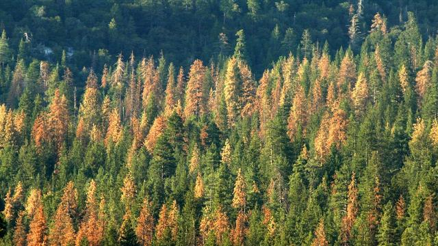 Why US forests growing farther apart is bad news #A37B28