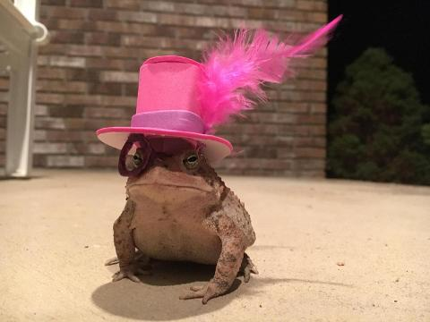 Over the summer, Chris Newsome often found himself entertaining a particularly slimy guest at his Jacksonville, Alabama home. Every night, the same little toad hopped up onto his porch for a visit.