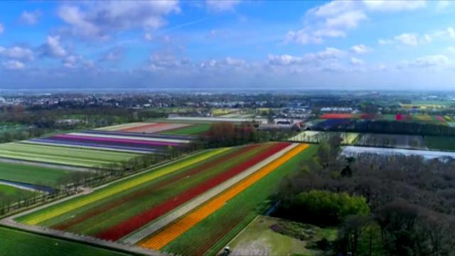 These tulip fields in Holland will take your breath away