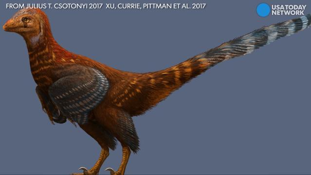 Newly discovered dinosaur looks like a chicken