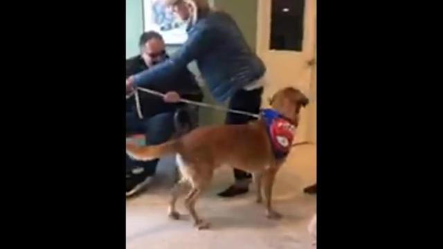 Pistons' Coach Adopts Animal Shelter's Last Dog
